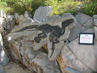 dinospritz-fossili-dinosaur